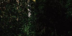plants2枚の写真