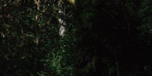 takedamiho、plantsの写真